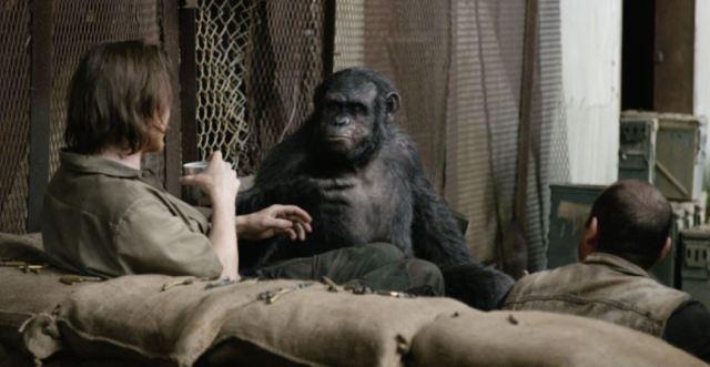 Koba socializing with humans