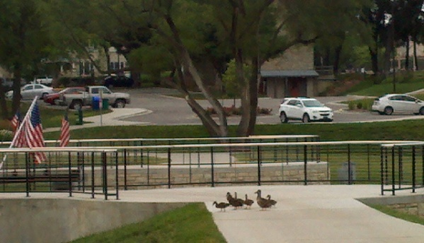 Local Duck friends