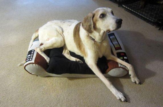 Captain Flint is in command Enterprise dog bed