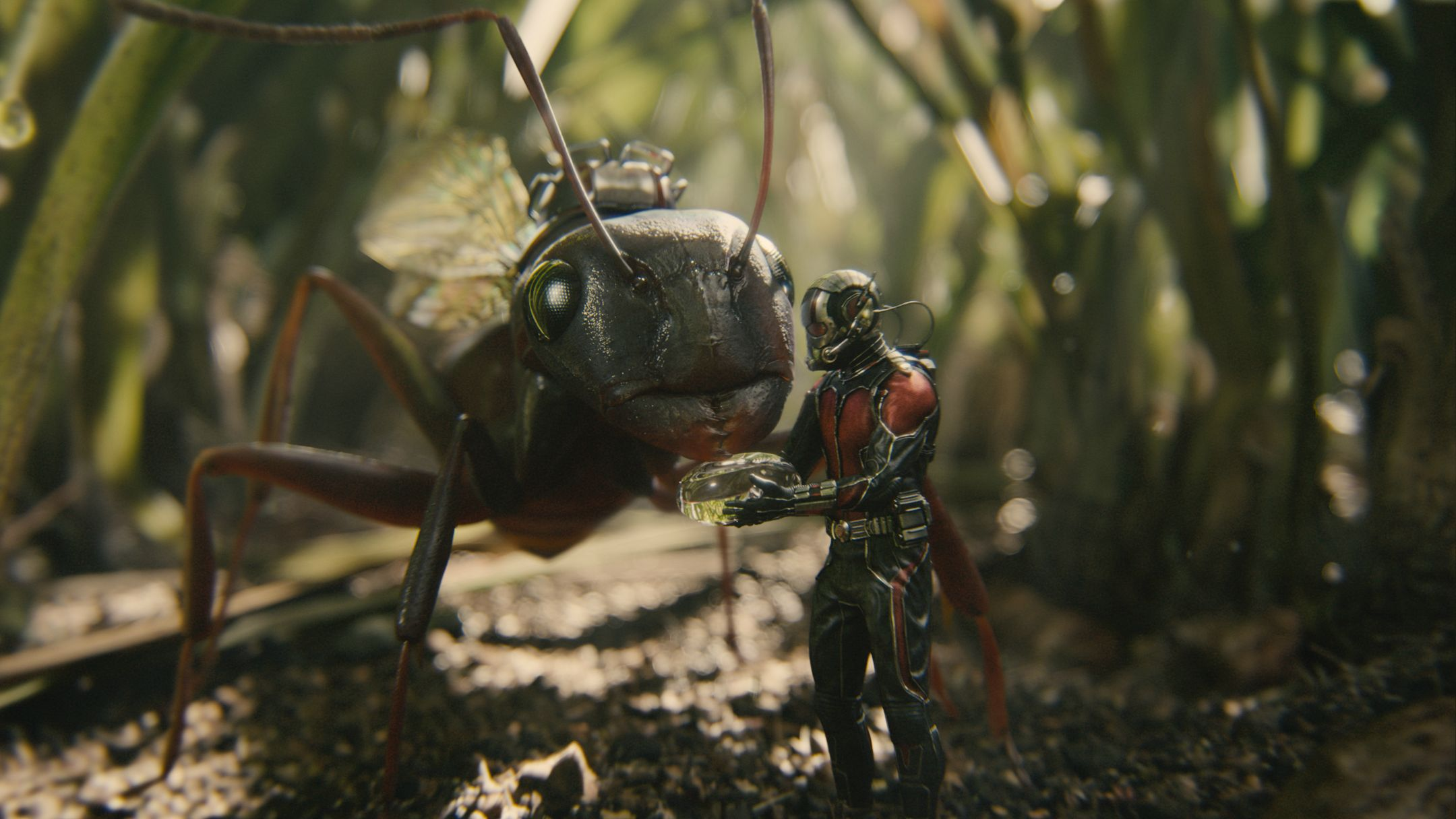 ant man - photo #35
