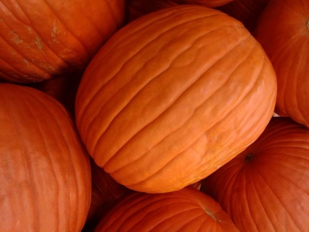 PS pumpkin background 2016