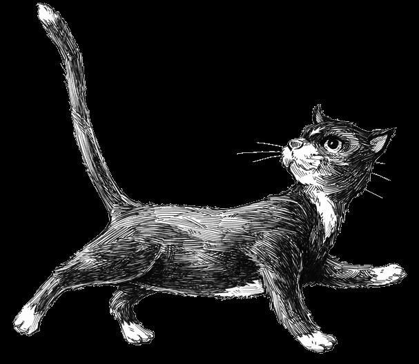 premeditated-myrtle-bunce-peony-the-cat-trns